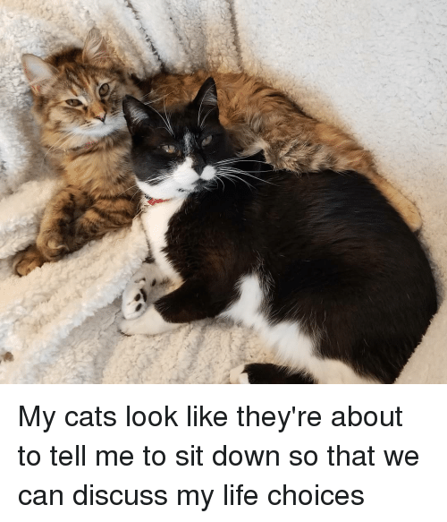 Cats, Funny, and Life: My cats look like they're about to tell me to sit down so that we can discuss my life choices