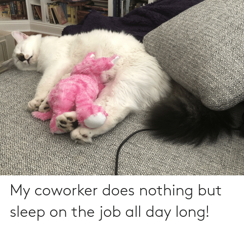 All Day Long: My coworker does nothing but sleep on the job all day long!