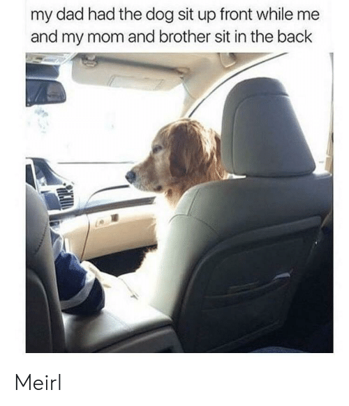 sit up: my dad had the dog sit up front while me  and my mom and brother sit in the back Meirl