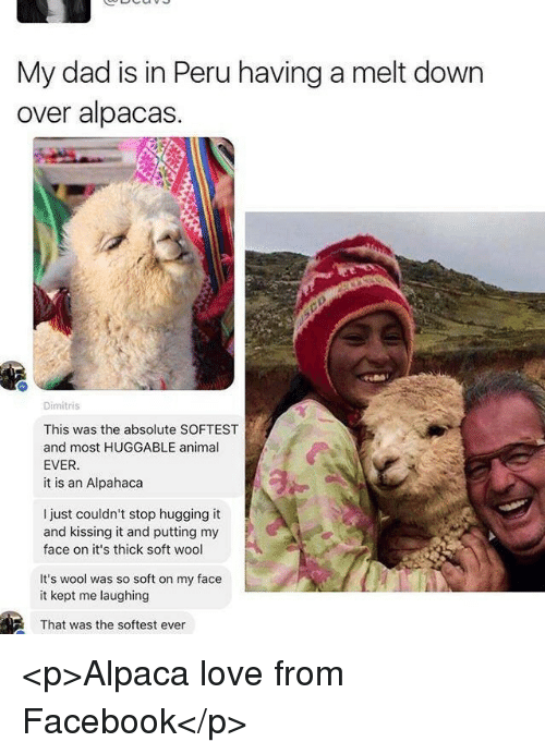 Dad, Facebook, and Love: My dad is in Peru having a melt down  over alpacas.  Dimitris  This was the absolute SOFTEST  and most HUGGABLE animal  EVER  it is an Alpahaca  I just couldn't stop hugging it  and kissing it and putting my  face on it's thick soft wool  It's wool was so soft on my face  it kept me laughing  That was the softest ever <p>Alpaca love from Facebook</p>