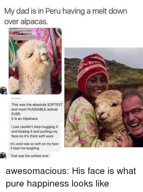 Dad, Tumblr, and Animal: My dad is in Peru having a melt down  over alpacas  Dimitris  This was the absolute SOFTEST  and most HUGGABLE animal  EVER  it is an Alpahaca  l just couldn't stop hugging it  and kissing it and putting my  face on it's thick soft wool  It's wool was so soft on my face  it kept me laughing  That was the softest ever awesomacious:  His face is what pure happiness looks like