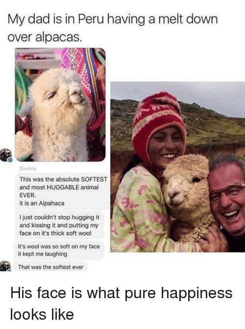 Dad, Animal, and Peru: My dad is in Peru having a melt down  over alpacas  Dimitris  This was the absolute SOFTEST  and most HUGGABLE animal  EVER  it is an Alpahaca  l just couldn't stop hugging it  and kissing it and putting my  face on it's thick soft wool  It's wool was so soft on my face  it kept me laughing  That was the softest ever His face is what pure happiness looks like