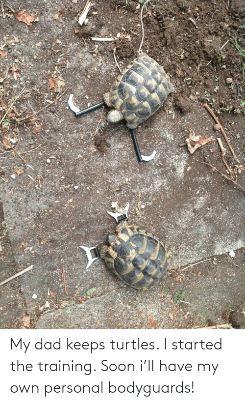 Keeps: My dad keeps turtles. I started the training. Soon i'll have my own personal bodyguards!