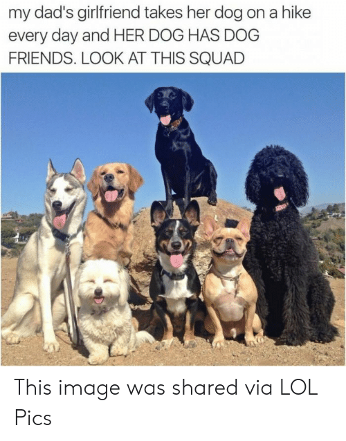 Friends, Lol, and Squad: my dad's girlfriend takes her dog on a hike  every day and HER DOG HAS DOG  FRIENDS. LOOK AT THIS SQUAD This image was shared via LOL Pics