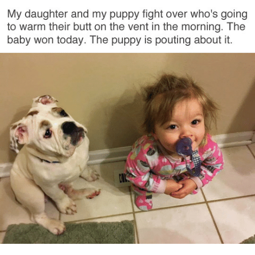 Butt, Puppy, and Today: My daughter and my puppy fight over who's going  to warm their butt on the vent in the morning. The  baby won today. The puppy is pouting about it