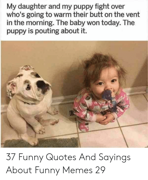 Quotes And: My daughter and my puppy fight over  who's going to warm their butt on the vent  in the morning. The baby won today. The  puppy is pouting about it. 37 Funny Quotes And Sayings About Funny Memes 29
