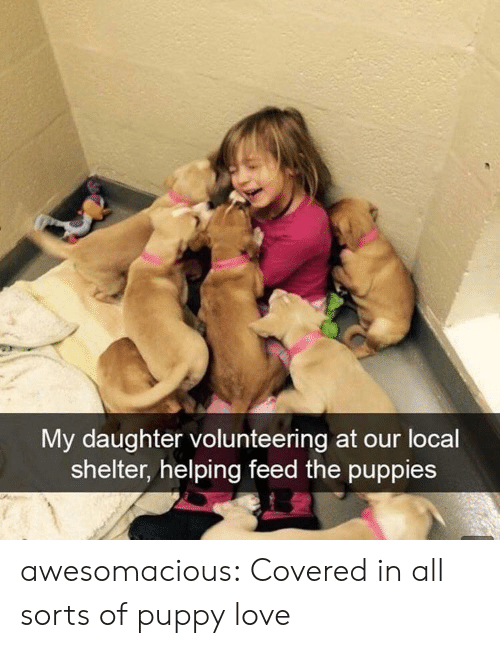 Love, Puppies, and Tumblr: My daughter volunteering at our locall  shelter, helping feed the puppies awesomacious:  Covered in all sorts of puppy love