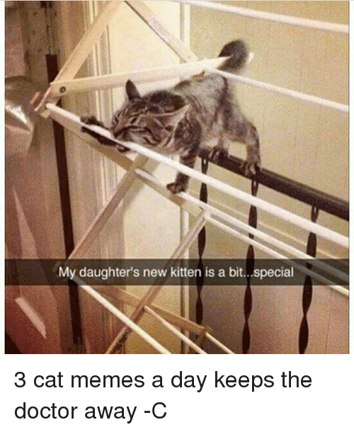 Doctor, Memes, and The Doctor: My daughter's new kitten is a bit.. special 3 cat memes a day keeps the doctor away -C