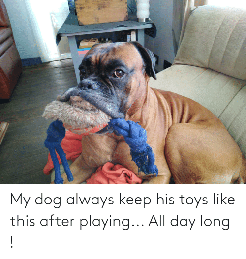 All Day Long: My dog always keep his toys like this after playing... All day long !