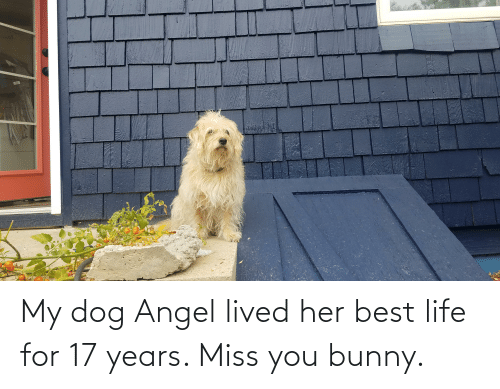 17 years: My dog Angel lived her best life for 17 years. Miss you bunny.