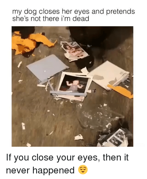 Ironic, Never, and Her: my dog closes her eyes and pretends  she's not there i'm dead If you close your eyes, then it never happened 😌