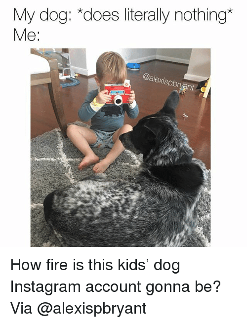 Fire, Instagram, and Memes: My dog: *does literally nothing*  Me:  alexispbr How fire is this kids' dog Instagram account gonna be? Via @alexispbryant
