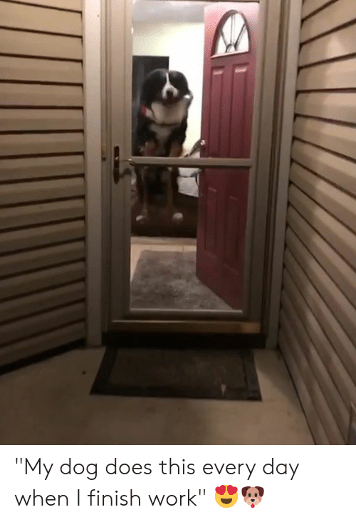 """Work, Dog, and Day: """"My dog does this every day when I finish work"""" 😍🐶"""
