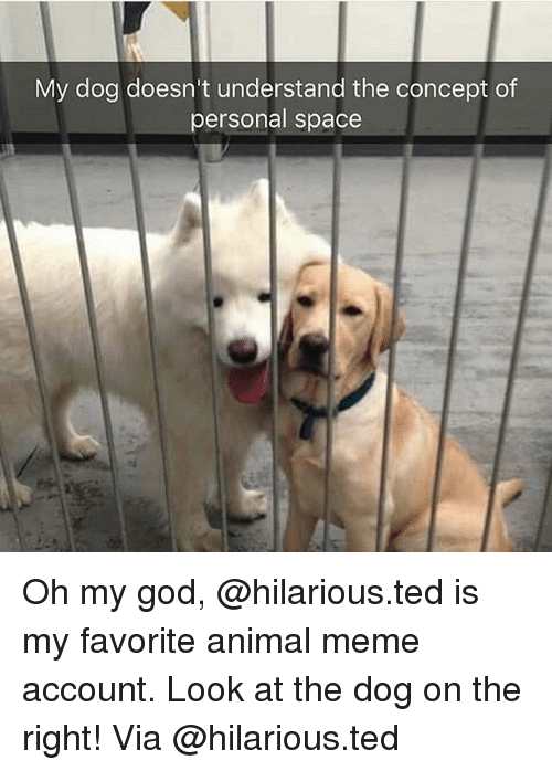 God, Meme, and Memes: My dog doesn't understand the concept of  personal space Oh my god, @hilarious.ted is my favorite animal meme account. Look at the dog on the right! Via @hilarious.ted