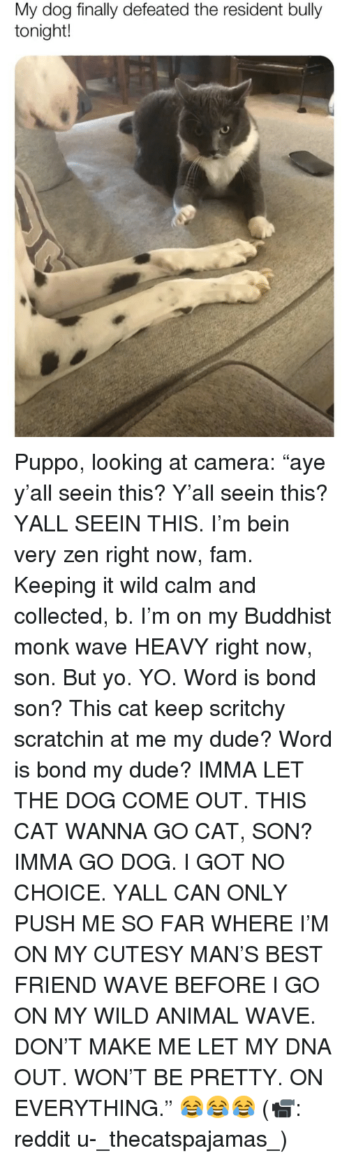 "Best Friend, Dude, and Fam: My dog finally defeated the resident bully  tonight! Puppo, looking at camera: ""aye y'all seein this? Y'all seein this? YALL SEEIN THIS. I'm bein very zen right now, fam. Keeping it wild calm and collected, b. I'm on my Buddhist monk wave HEAVY right now, son. But yo. YO. Word is bond son? This cat keep scritchy scratchin at me my dude? Word is bond my dude? IMMA LET THE DOG COME OUT. THIS CAT WANNA GO CAT, SON? IMMA GO DOG. I GOT NO CHOICE. YALL CAN ONLY PUSH ME SO FAR WHERE I'M ON MY CUTESY MAN'S BEST FRIEND WAVE BEFORE I GO ON MY WILD ANIMAL WAVE. DON'T MAKE ME LET MY DNA OUT. WON'T BE PRETTY. ON EVERYTHING."" 😂😂😂 (📹: reddit u-_thecatspajamas_)"