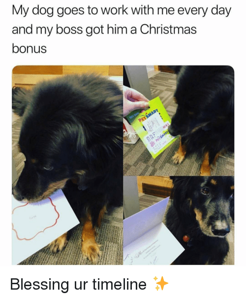 Christmas, Work, and Girl Memes: My dog goes to work with me every day  and my boss got him a Christmas  bonus Blessing ur timeline ✨