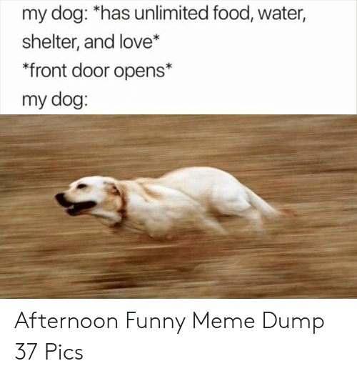 funny meme: my dog: *has unlimited food, water,  shelter, and love*  front door opens*  my dog: Afternoon Funny Meme Dump 37 Pics