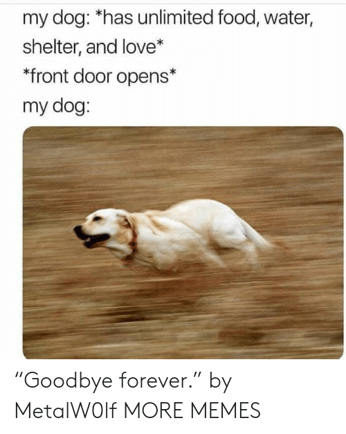 """Dank, Food, and Love: my dog: *has unlimited food, water,  shelter, and love*  *front door opens*  my dog: """"Goodbye forever."""" by MetalW0lf MORE MEMES"""