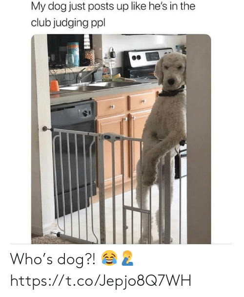 Club, Dog, and Who: My dog just posts up like he's in the  club judging ppl Who's dog?! 😂🤦‍♂️ https://t.co/Jepjo8Q7WH