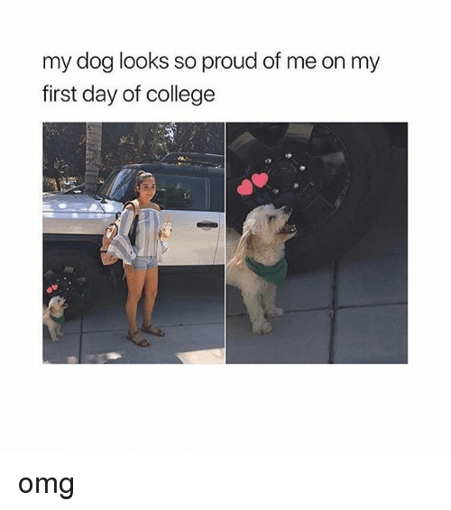 College, Memes, and Omg: my dog looks so proud of me on my  first day of college omg