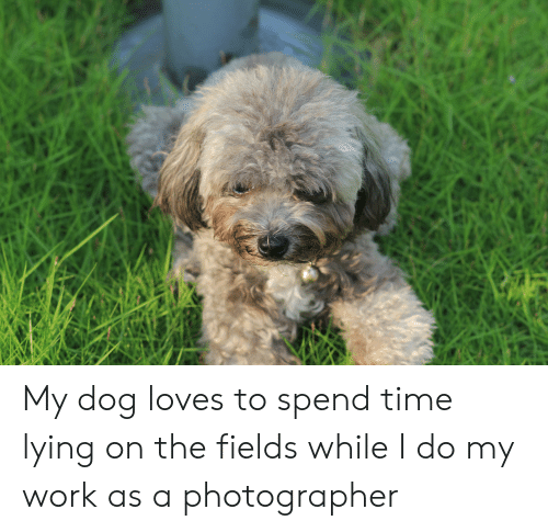 Work, Time, and Lying: My dog loves to spend time lying on the fields while I do my work as a photographer
