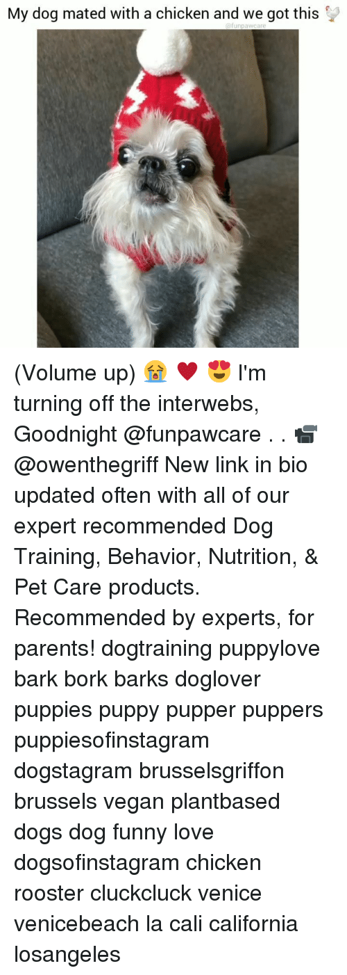 Dogs, Funny, and Love: My dog mated with a chicken and we got this (Volume up) 😭 ♥️ 😍 I'm turning off the interwebs, Goodnight @funpawcare . . 📹 @owenthegriff New link in bio updated often with all of our expert recommended Dog Training, Behavior, Nutrition, & Pet Care products. Recommended by experts, for parents! dogtraining puppylove bark bork barks doglover puppies puppy pupper puppers puppiesofinstagram dogstagram brusselsgriffon brussels vegan plantbased dogs dog funny love dogsofinstagram chicken rooster cluckcluck venice venicebeach la cali california losangeles