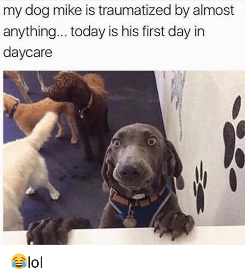Memes, Today, and 🤖: my dog mike is traumatized by almost  anything... today is his first day in  daycare 😂lol