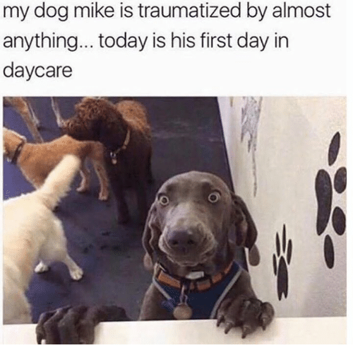 Dank, Today, and 🤖: my dog mike is traumatized by almost  anything... today is his first day in  daycare