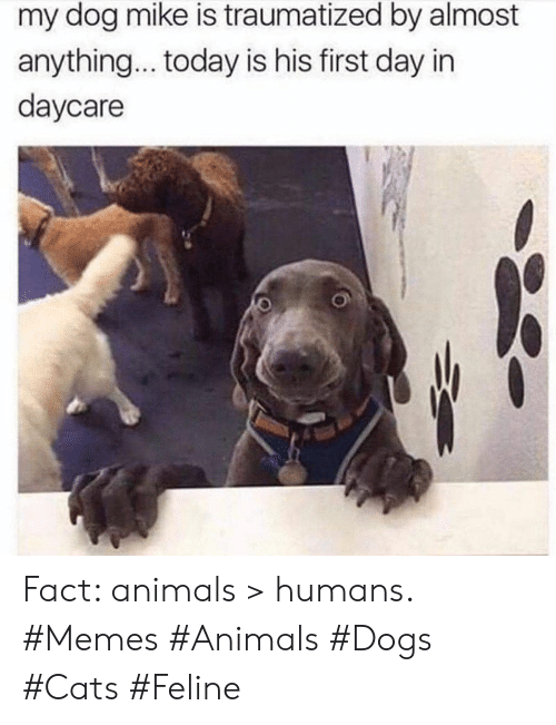Traumatized: my dog mike is traumatized by almost  anything... today is his first day in  daycare Fact: animals > humans. #Memes #Animals #Dogs #Cats #Feline