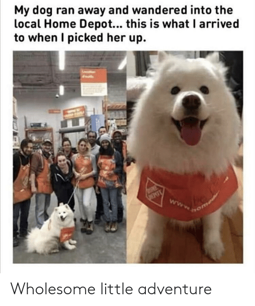 Home Depot: My dog ran away and wandered into the  local Home Depot... this is what I arrived  to when I picked her up. Wholesome little adventure
