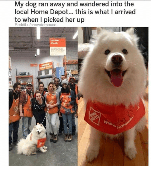 Home Depot: My dog ran away and wandered into the  local Home Depot... this is what I arrived  to when I picked her up  Reddit u/chowdersauce