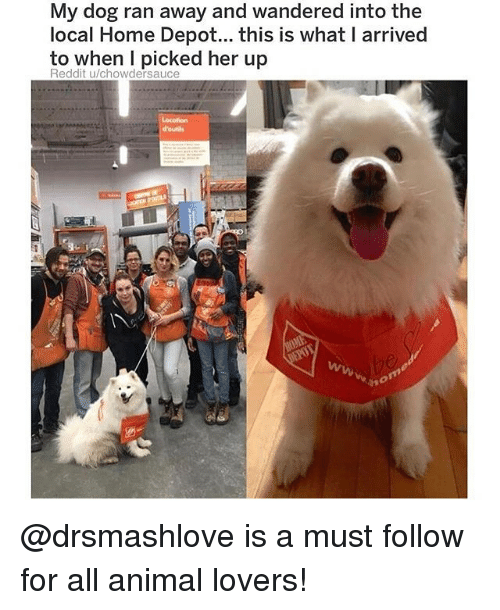 Memes, Reddit, and Animal: My dog rar  local Home Depot... this is what I arrived  to when I picked her up  Reddit u/chowdersauce  Locotion  d'ouils @drsmashlove is a must follow for all animal lovers!
