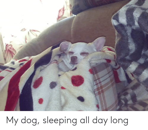 All Day Long: My dog, sleeping all day long