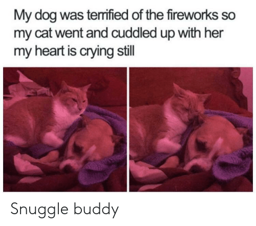 Crying, Fireworks, and Heart: My dog was terrified of the fireworks so  my cat went and cuddled up with her  my heart is crying still Snuggle buddy