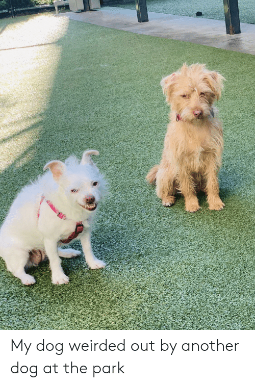 Another, Dog, and Park: My dog weirded out by another dog at the park