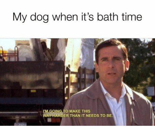 bath time: My dog when it's bath time  GOING TO MAKE THIS  WAY HARDER THAN IT NEEDS TO BE