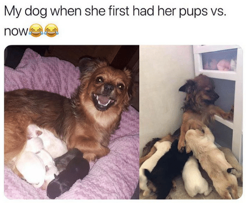 Her, Dog, and She: My dog when she first had her pups vs.  now