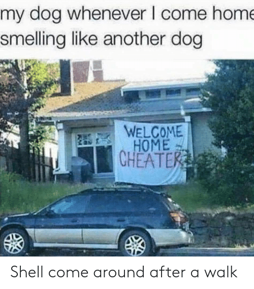 Home, Another, and Dog: my dog whenever I come hom  smelling like another dog  WELCOME  HOME  CHEATE Shell come around after a walk