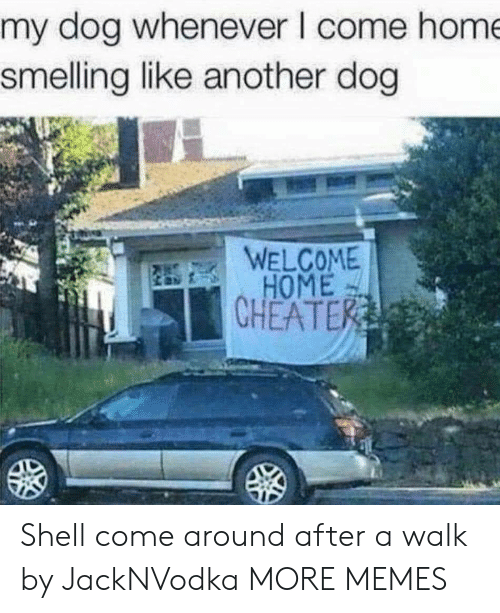 Dank, Memes, and Target: my dog whenever I come hom  smelling like another dog  WELCOME  HOME  CHEATE Shell come around after a walk by JackNVodka MORE MEMES