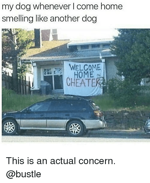 Memes, Home, and 🤖: my dog whenever I come home  smelling like another dog  WELCOME  HOME  CHEATER This is an actual concern. @bustle