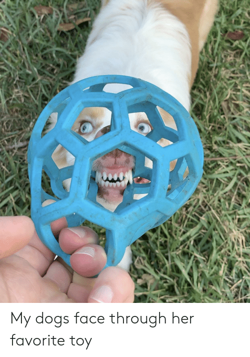 Dogs, Her, and Face: My dogs face through her favorite toy