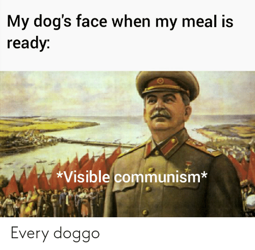Dogs, Communism, and Doggo: My dog's face when my meal is  ready:  *Visible communism* Every doggo