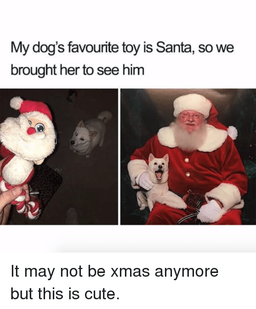 Cute, Dogs, and Santa: My dog's favourite toy is Santa, so we  brought her to see him It may not be xmas anymore but this is cute.