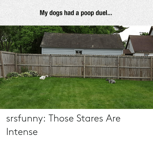 Dogs, Poop, and Tumblr: My dogs had a poop duel... srsfunny:  Those Stares Are Intense