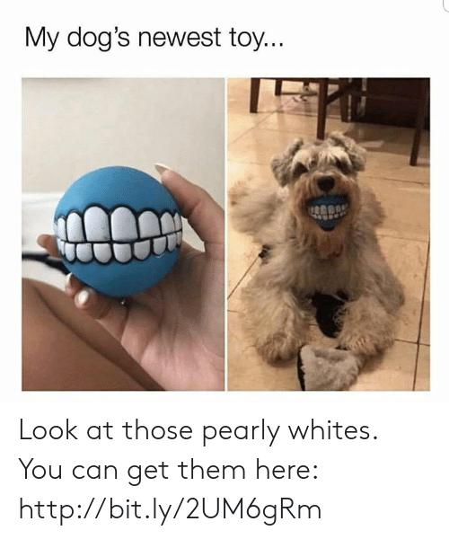 Dank, Dogs, and Http: My dog's newest toy. Look at those pearly whites. You can get them here: http://bit.ly/2UM6gRm
