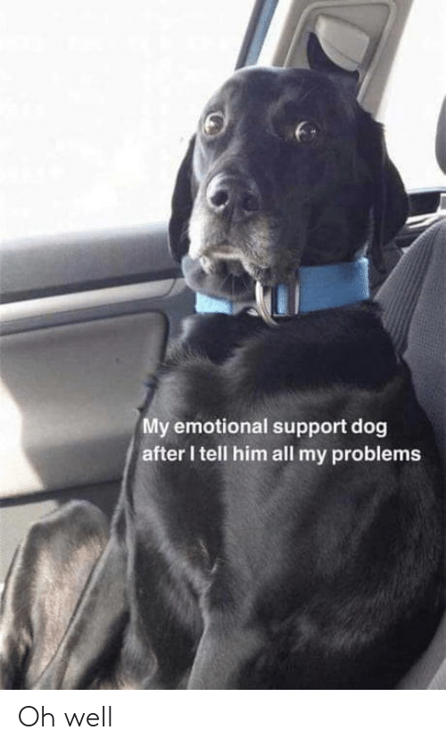 Oh Well: My emotional support dog  after I tell him all my problems Oh well