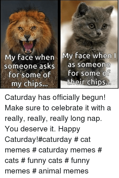 Caturday: My face when My face when  someone asks as someone  for some ofFor some o  their chips.  my chipS... Caturday has officially begun! Make sure to celebrate it with a really, really, really long nap. You deserve it. Happy Caturday!#caturday # cat memes # caturday memes # cats # funny cats # funny memes # animal memes