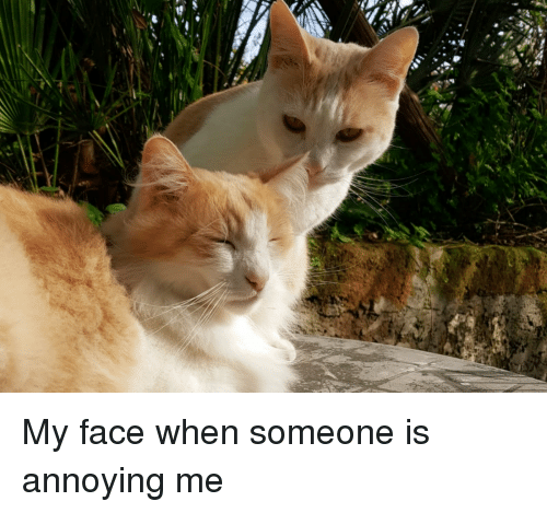 My Face When, Annoying, and Face