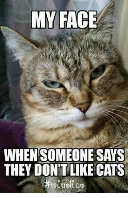 My Face When: MY FACE  WHEN SOMEONESAYS  THEY DONTLIKE CATS  noltco