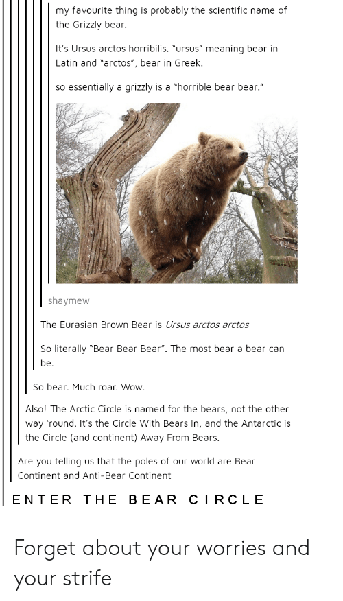 """Wow, Bear, and Bears: my favourite thing is probably the scientific name of  the Grizzly bear.  It's Ursus arctos horribilis. """"ursus"""" meaning bear in  Latin and """"arctos"""", bear in Greek.  so essentially a grizzly is a """"horrible bear bear.""""  shaymew  The Eurasian Brown Bear is Ursus arctos arctos  So literally """"Bear Bear Bear"""". The most bear a bear can  be.  So bear. Much roar. Wow.  Also! The Arctic Circle is named for the bears, not the other  way 'round. It's the Circle With Bears In, and the Antarctic is  the Circle (and continent) Away From Bears.  Are you telling us that the poles of our world are Bear  Continent and Anti-Bear Continent  ENTER THE BEAR CIRCLE Forget about your worries and your strife"""